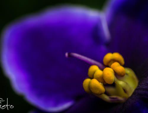 La mirada de una flor