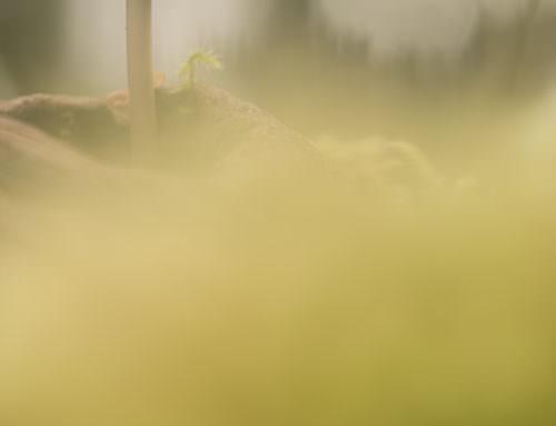 Entre los musgos