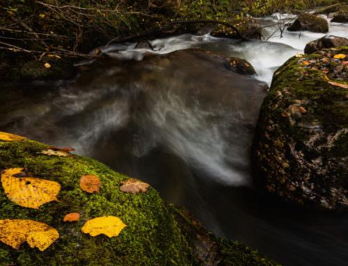 Las últimas hojas del otoño