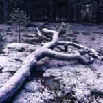 Primera nevada de este otoño